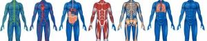 anatomy-physiology-1600x320